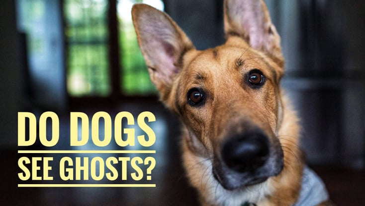 Do dogs see ghosts?