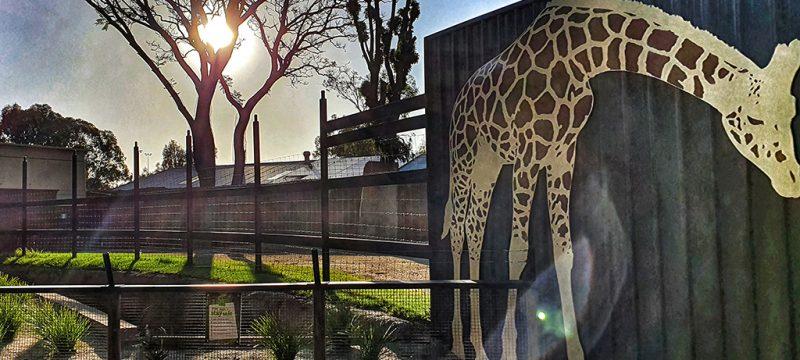 Haunted Adelaide Zoo
